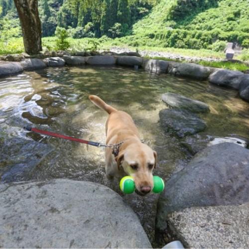 キャンプに来て川遊びを楽しむ犬