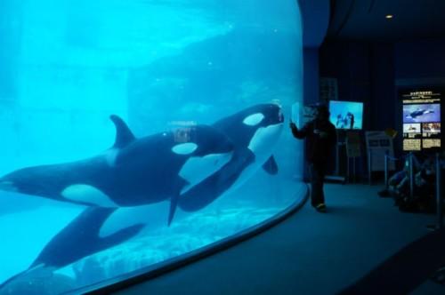 名古屋港水族館 シャチ ショー マツコの知らない世界