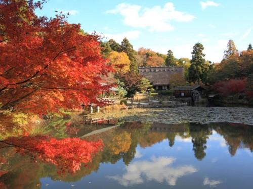 愛知県 名古屋市 紅葉 東山公園