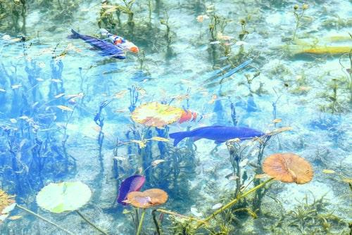 モネの池 パワースポット